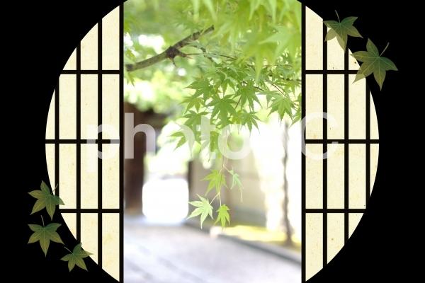 夏の風景01の写真