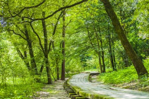 自然 風景 景色 環境 スナップ 旅行 散歩 公園 森林 緑 日光 季節 葉っぱ 植物 美しい きれい シルエット 癒し 青い 草花 野草 栽培 のどか  優しい 保養