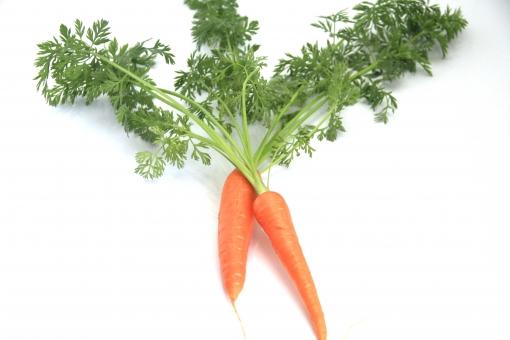 人参 ニンジン にんじん 野菜 植物 食べ物 葉付き オレンジ 白バック コピースペース 二本 緑 みどり
