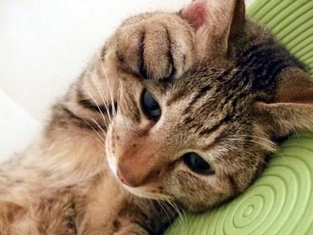 ネコ 猫 ねこ 愛猫 うつろな目 猫の手 困った 悩む 考える 考え事 考え中 顔 表情 目を開けた 遠い目 悲しげ 白いひげ 家猫 飼い猫 室内猫 ペット 動物 生き物 アップ 接写 マクロ かわいい 可愛い ちゃこ