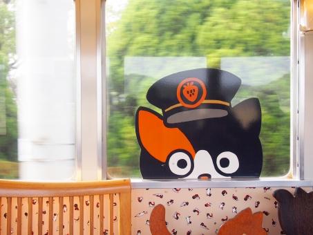 電車 車窓 列車 和歌山 和歌山県 和歌山電鐵 わかやま 貴志川線 貴志川 貴志 猫 ネコ ねこ 駅長 鉄道 たま たま電車 かわいい 景色 風景 内装 車内 座席 シート 窓 三毛猫 ラッピング 走行中 乗車 ローカル線