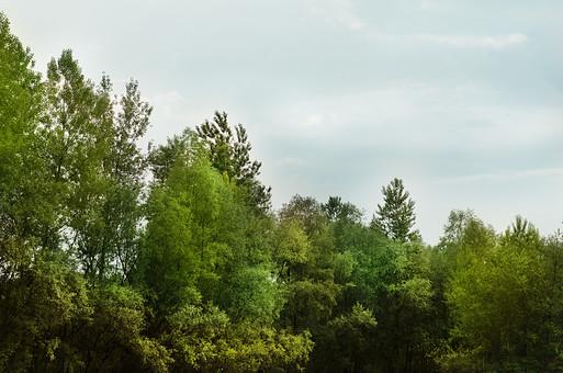 木 木々 葉っぱ 葉 植物 自然 森 森の中 林 林の中 青空 空 癒し 山 山の中 風 涼しい 澄んだ空 高い木 山林 緑 夏 夏山 暑い 季節  残暑
