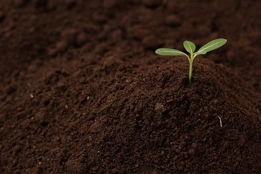 土 つち ツチ 土壌 大地 陸地 グラウンド 地べた 地面 土地 グランド 泥 砂 有機物 砂土 砂壌土 壌土 埴壌土 埴土 環境 農業 園芸 肥料 素材 粒 粒子 草 くさ クサ 葉 葉っぱ 緑 グリーン 自然 成長 伸びる 植物 エコ エコロジー クリーン 栽培 ガーデニング オーガニック ロハス 芽 新芽 芽吹く 発芽 双葉 命