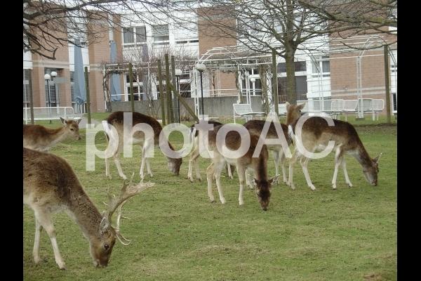 鹿公園のシカたち、食事中の写真