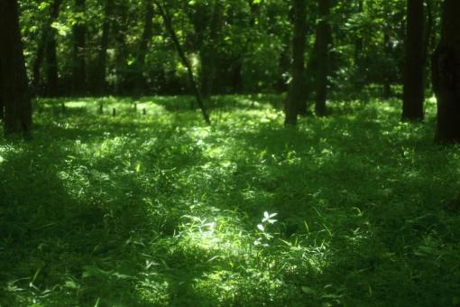 時間 木陰 緑 散歩道 ひだまり 日だまり スポットライト 森 森林 林 ハイキング ピクニック 涼しい 楽しい 秘密 休憩 呼吸 深呼吸 新緑 のんびり 木漏れ日 こもれび 熱中症 ゆっくり 若葉 青葉 バックグラウンド 爽やか 背景デザイン 自然 ナチュラル 幸せ 春 初夏 贈り物 カード メッセージ 背景 壁紙 植物 5月 メッセージカード 背景素材 素材