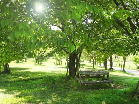 新緑 テーブル ベンチ 5月 木漏れ日 日差し 木陰 太陽 光 初夏 休憩 日よけ 風景 公園 自然 緑 グリーン 木 アウトドア 休む 日陰 植物 4月 晴れ 休日 6月 7月 夏 休憩場所 レジャー