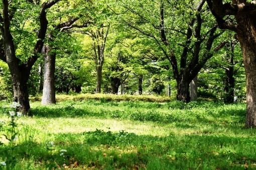 森林浴5の写真