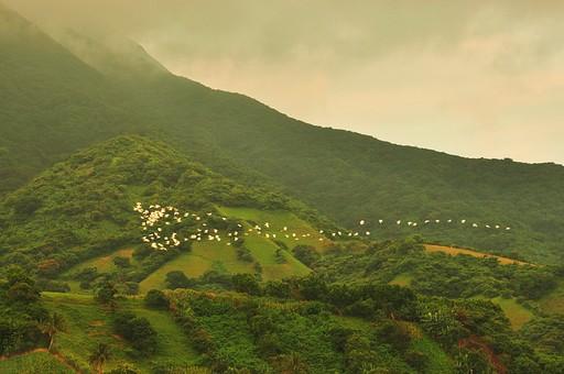 外国 海外 アジア 東南アジア フィリピン 熱帯 モンスーン 多雨 屋外 野外 自然 風景 景色 山 山並み 丘 植物 木 樹木 森 森林 熱帯植物 熱帯雨林 空 雲 曇り 曇天 ガス 霧 霞 眺望 俯瞰