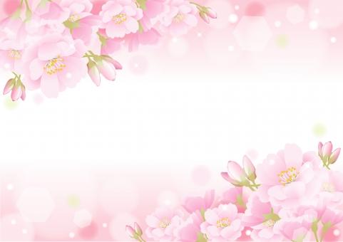 桜 卒業 入学に関する写真写真素材なら写真ac無料フリー