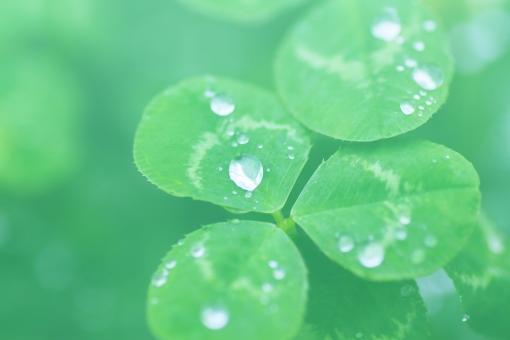クローバー 水滴 緑 5月 5月 初夏 五月 植物 フレッシュ 瑞々しい みずみずしい 雨上がり エコ 環境 みどり 淡い 薄い 背景 背景画像 透かし 背景素材 素材 背景写真 写真 画像 フリー グラデーション パステル パステルカラー 緑色 グリーン 葉 葉っぱ green clover エコロジー 優しい 自然