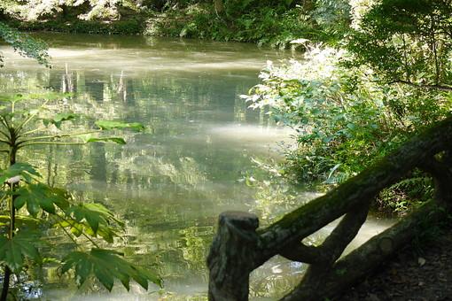 濁る 濁った 葉っぱ 葉 池 水 自然 植物 水面 樹木 植物 外 屋外 日なた 日中 晴れ 晴天 環境 癒し 森林浴 鏡池 森 森林 枝 湖