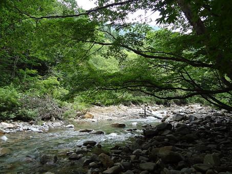 静か 喉か 平和 大地 自然 環境 問題 エコ 活動 風景 田舎 植物 リーフ 草 大自然 生い茂る 茂る 緑 深緑 晴れ 山 樹木 晴天 快晴 青空 澄み渡る 濃い 川 川沿い 水辺 石 岩 川辺 緩やか 渓流 浅い