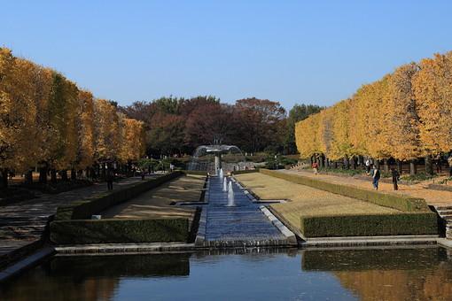 公園 パーク 噴水 水 秋 紅葉 植物 樹 木 樹木 自然 屋外 風景 景色 沢山 葉っぱ 葉 生える 空 青空 雲 晴天 晴れ 青 並木