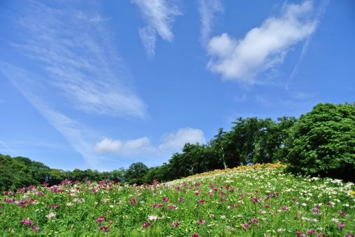 花畑と青空の写真