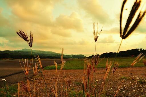 外国 海外 アジア 東南アジア フィリピン 熱帯 屋外 野外 自然 風景 景色 草原 野原 草野 丘 植物 草 芝 雑草 枯れ草 穂 空 雲 曇り 彩雲 薄明 道 道路 牧場 ファーム 滑走路脇 路肩 広い 広大