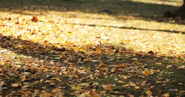 落ち葉の絨毯の写真
