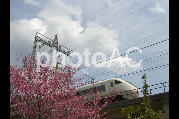 春の湖西線002の写真