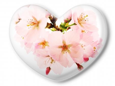 ハート はーと heart 素材 背景 アイコン ラブ love 愛 ロマンチック バレンタイン フレーム クリスタル風 枠 さくら サクラ 桜 ピンク 白バック