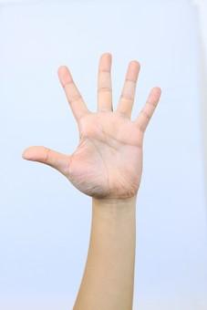 手 ハンド ハンドパーツ ボディパーツ 人物 指 手元 手首 ジェスチャー 身振り 肌 人肌 腕 パーツ 部位 片手 片腕 白バック 白背景 コピースペース テキストスペース 左手 挙手 挙げる パー 手を開く 手のひら 掌 五本 5 5 手の平