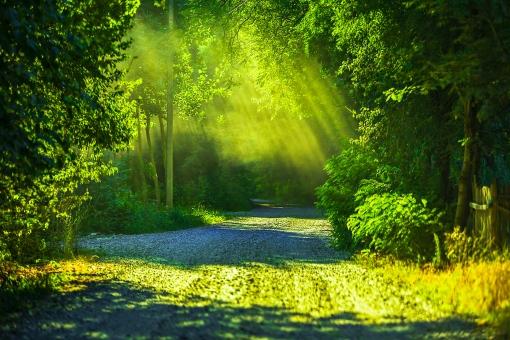 緑のある風景26の写真