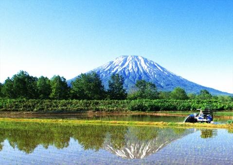 残雪の蝦夷富士の写真