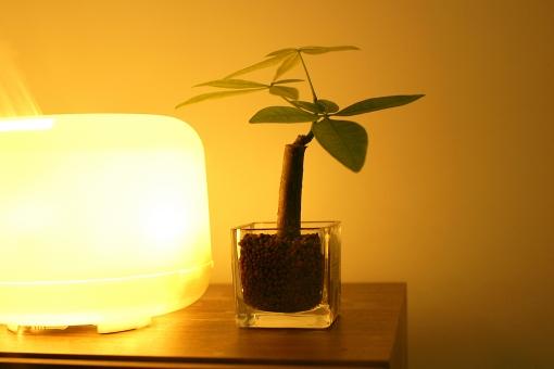 部屋 家 住宅 インテリア 室内 雑貨 観葉植物 植物 グリーン 木 葉 緑 ライト 電気 照明 アロマ アロマランプ くつろぎ ハイドロカルチャー リラックス