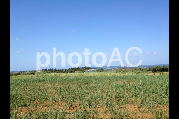 宮古島 青空の下の畑の写真