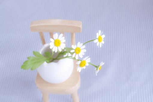 マトリカリア 白い花 可憐 可愛い 清楚 イス 椅子 チェア 木の椅子 いす 優しい 柔和 なごみ 癒し 花 植物