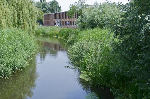 オランダ Holland アムステルダム 川 沢 沼 水 水面 植物 草むら 生い茂る 雑草 緑 公園 街並み 風景 景色 建物 裏手 木 水辺 草 葉っぱ 湖 ほとり ヨーロッパ 庭園