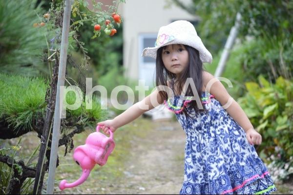 水やりをする子供の写真