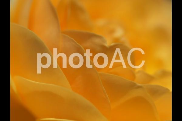 オレンジ色の花のアップの写真