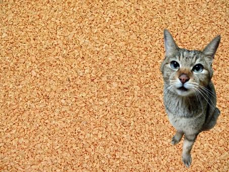 コルクボード メッセージボード コピースペース 文字スペース テキストスペース 余白 猫 ネコ 猫画像 加工 合成 可愛い かわいい メッセージスペース ちゃこ 動物 横画像 よこ 背景 バックグラウンド