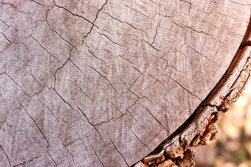 木 切り株 切株  茶色 木肌 背景 背景素材 バックグラウンド 植物 自然 テクスチャ 模様 樹木 伐採 木材 年輪