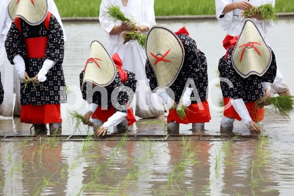 お田植え祭り 早乙女の写真