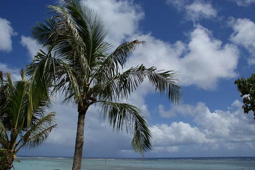 外国 海外 外国風景 海外風景 観光 旅行 休暇 グアム ミクロネシア アメリカ合衆国 景色 風景 自然 空 晴天  植物 葉 葉っぱ 南国 南国植物 樹木 木 樹 海 ビーチ 海岸 波 ヤシ