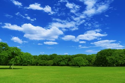 夏の芝生と青空と雲と緑の木々の写真