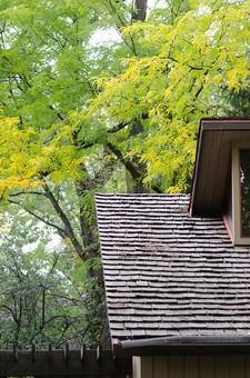 階段と紅葉する木2