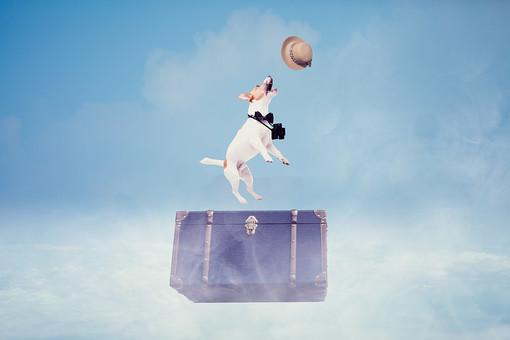 麦わら帽子で旅する犬の写真