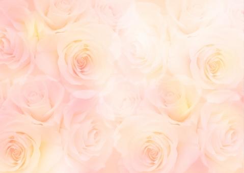 バラ 薔薇 ばら 花 背景 テクスチャ 美しい ロマンチック 春 メッセージ メッセージカード 記念日 ギフトカード 装飾 ポストカード ホワイトデー ブライダル 結婚 結婚式 お祝い 誕生日カード エステ 美容 ウェルカムボード 淡い バレンタインデー かわいい 美しい きれい ハッピー