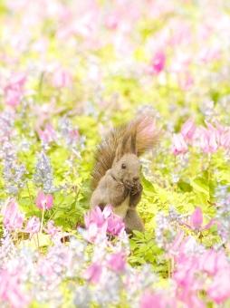 早春のお花畑の写真