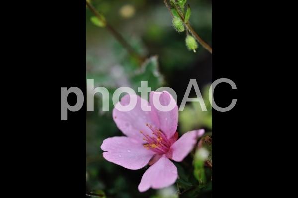 落花の写真