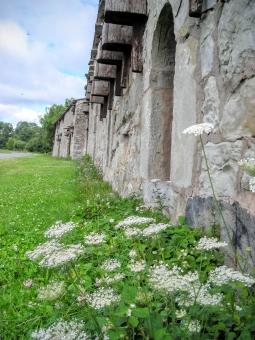 北欧 花 夏 野生 野の花 植物 自然 花飾り 白い花 夏至祭 花冠 季節 草花 石造り 建物 中世 農園 ゴットランド島