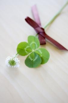 クローバー 植物 草 四葉のクローバー 四葉 ラッキーアイテム 幸運 ラッキー 幸せ 緑 グリーン シロツメクサ シロツメグサ 野花 草花 花 花束 四つ葉 四ツ葉 ラッキーアイテム お守り