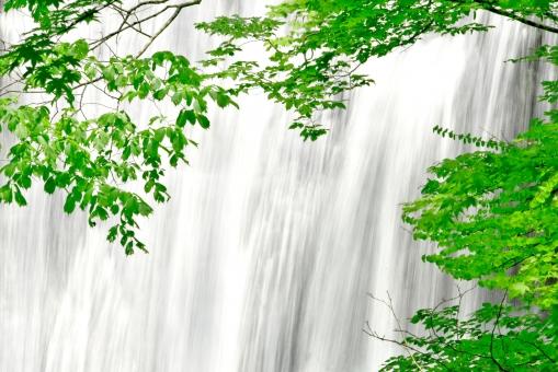 滝の流れ 涼しい滝 緑の葉 夏 滝 植物 植木 樹 木 樹木 緑 自然 屋外 風景 景色 葉っぱ 葉 茂る 森 水 落ちる 流れる マイナスイオン