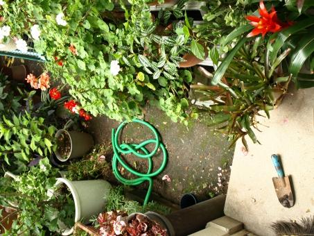 庭 garden バラ 雑然 ガーデニング 鉢植え プランター