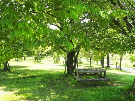 新緑 テーブル ベンチ 5月 初夏 休憩 日よけ 風景 公園 自然 緑 グリーン 木 アウトドア 休む 休憩場所 日陰 植物 4月 晴れ 休日 木陰 6月 7月 夏 レジャー 若葉