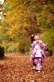 七五三 三歳 3歳 女の子 子供 こども 子ども 祝 被布 秋 落ち葉 着物 mdfk023