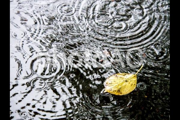雨の日-3の写真