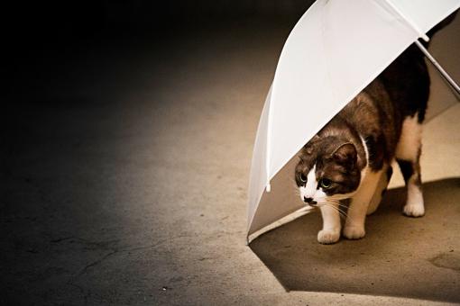 動物 哺乳類 小動物 生き物 生物 ネコ 猫 ねこ イエネコ 飼い猫 ペット 飼育 自由 好奇心 気まま マイペース 凝視 傘 パラソル かくれんぼ 隠れる 潜む 警戒 威嚇 毛並み 可愛い