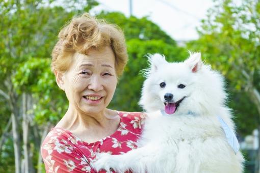 シニア女性・白い犬の写真